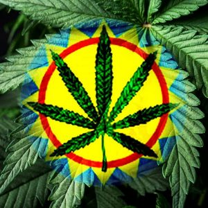 Dagga Cannabis Policies South Africa