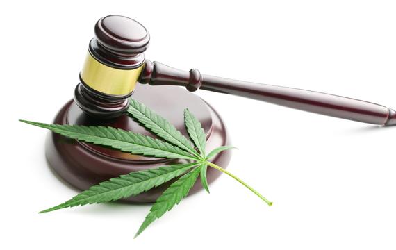 Cannabis Bill South Africa